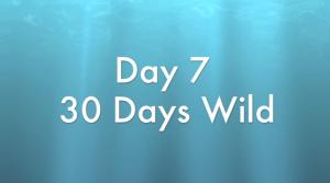 Day7-30DaysWild