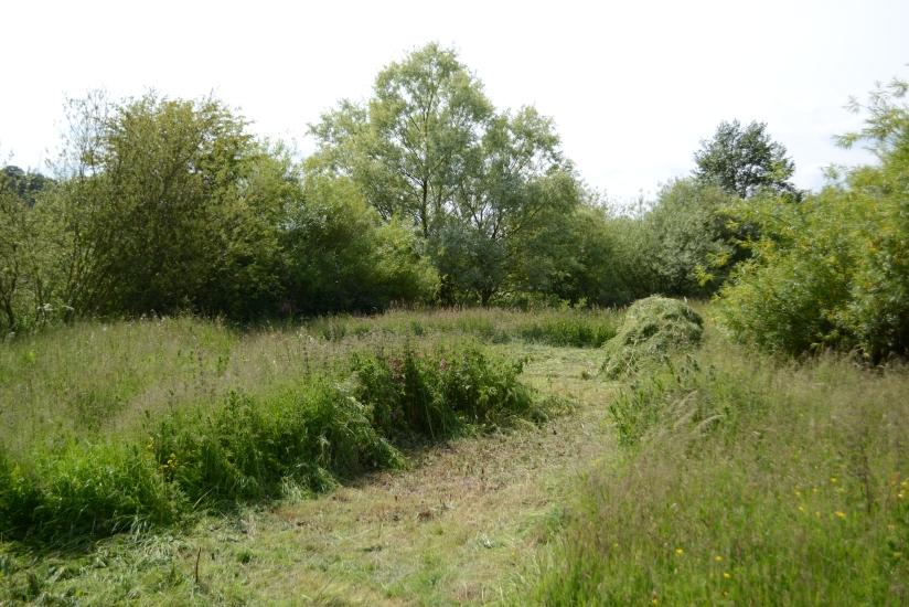 Some grassland management.
