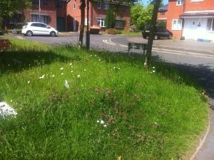 Lovely lawn!