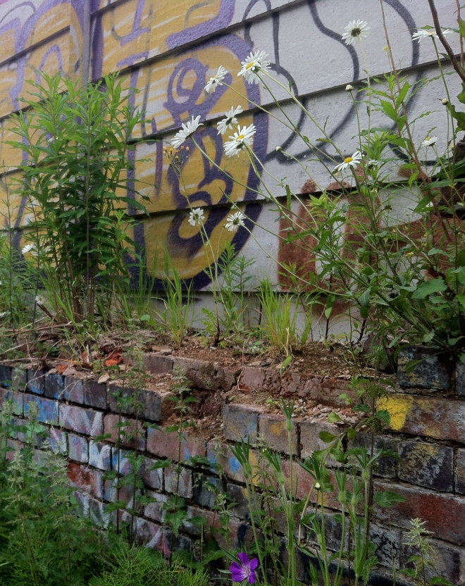 Urban art, with a crumbling wall and wildflowers - I think it looks beautiful.
