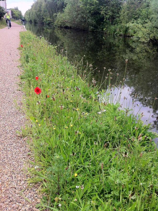I also love seeing strips of Wildflower like this - Poppies, Horsetails and Daisies.