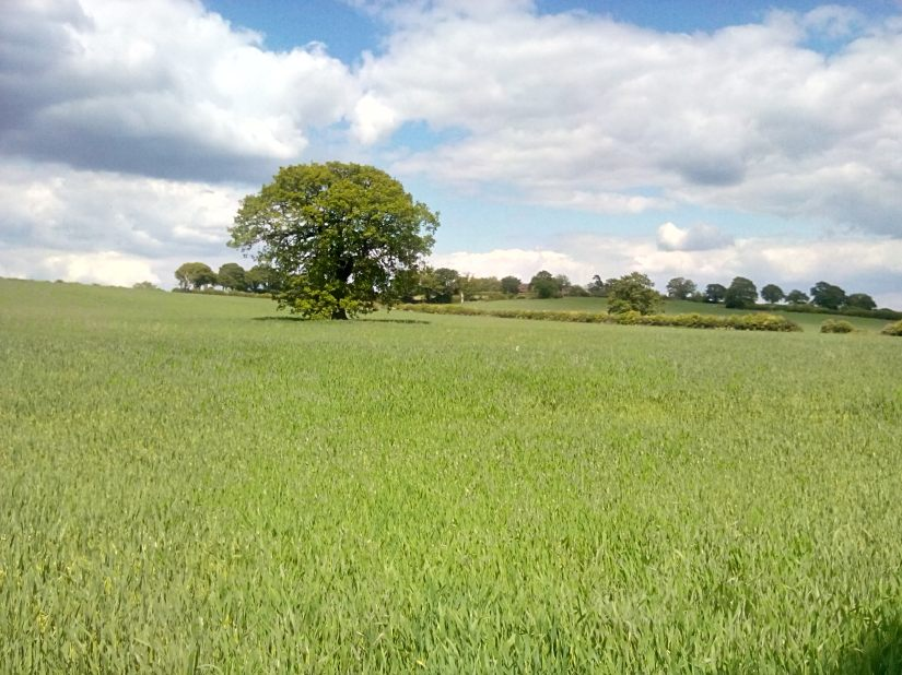 Field of Wheat with Lower Hill Farm in the distance