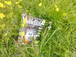 BBC Wildlife magazine in the Wild