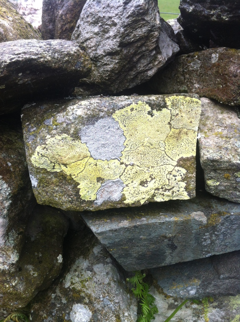 One could Lichen this to a map ;)