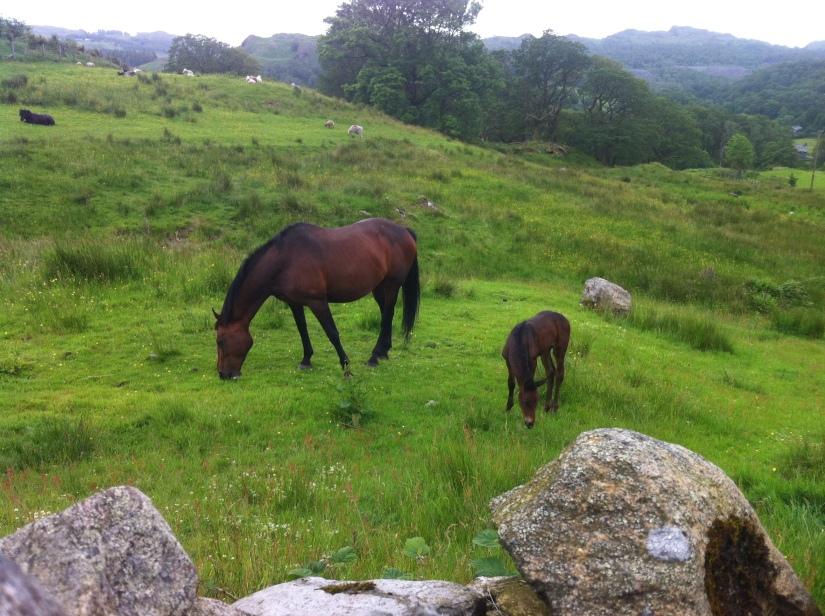 That's it, don't be shy lil' foalie! :)